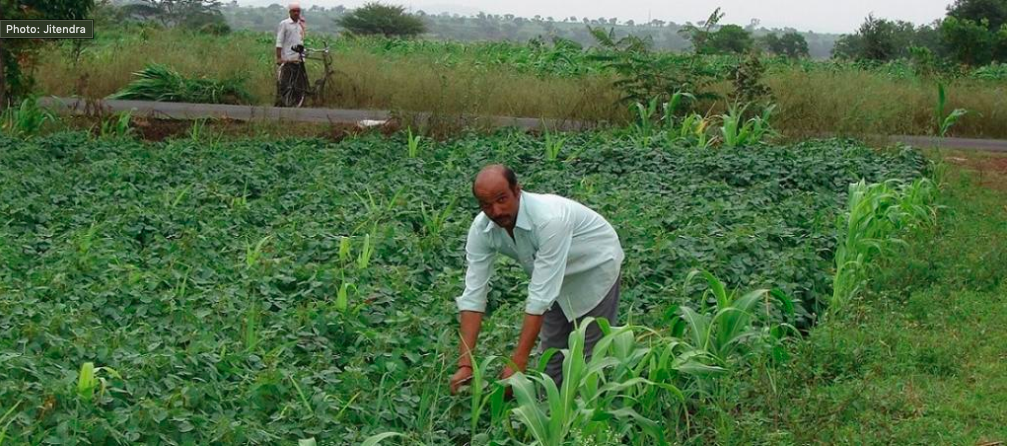 Budget push for zero budget farming but contradictions mar Andhra's natural agri foray