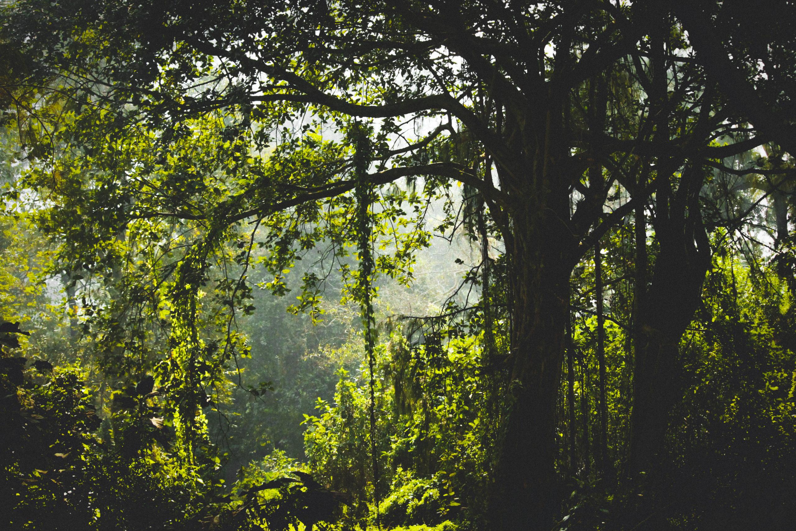 In Karnataka, Accused MLA Gets Forest Ministry