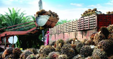 Palm Oil Policy Needs Wider Consultation